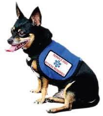 Service Dog Housing Discrimination