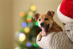 3 Reasons Why You Shouldn't Give Pets as Gifts
