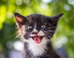 What to do if You Find Kittens During the Covid-19 Crisis