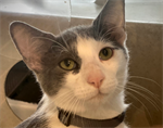 Happy Tails: June 22, 2020 - June 28, 2020