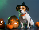 Keep Pets Safe This Howl-O-Ween