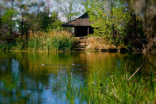 Or Visit The San Antonio Botanical Garden Website.