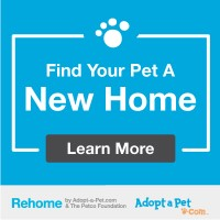 Find you pet a new hom at Rehome